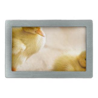 Two newborn yellow ducklings on wooden floor belt buckles
