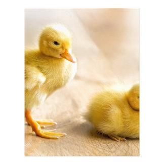 Two newborn yellow ducklings on wooden floor letterhead