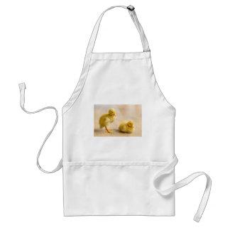 Two newborn yellow ducklings on wooden floor standard apron