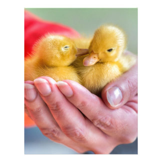 Two newborn yellow ducklings sitting on hand personalized letterhead