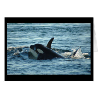 Two Orcas Greeting Card