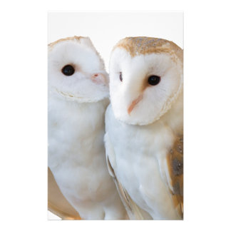 two owls friends stationery