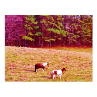 Two Painted Horses Postcard