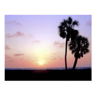 Two Palm Trees Postcard