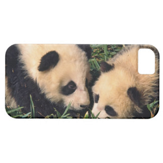 Two panda cubs in the bamboo bush, Wolong, iPhone 5 Cover