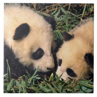 Two panda cubs in the bamboo bush, Wolong, Tiles