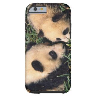 Two panda cubs in the bamboo bush, Wolong, Tough iPhone 6 Case