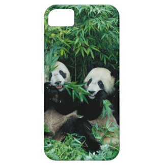 Two pandas eating bamboo together, Wolong, 2 iPhone 5 Cases