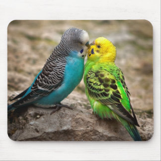 Two Parakeets Mouse Pad