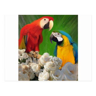 Two Parrots and White Roses Postcard