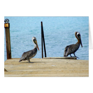 Two pelicans on the pier, Curacao, Caribbean, Note Card