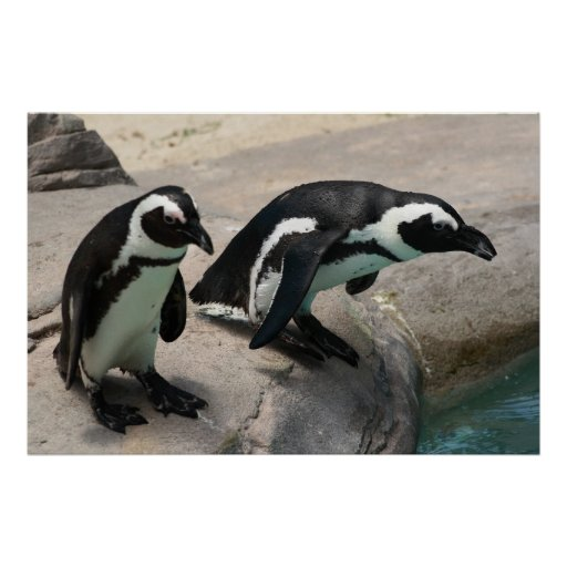 Two Penguins Photo Poster