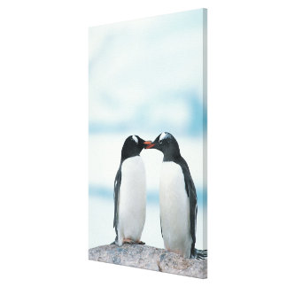 Two Penguins touching beaks Canvas Prints