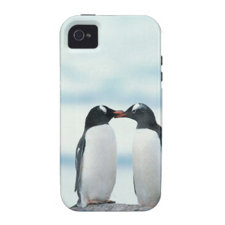 Two Penguins touching beaks Vibe iPhone 4 Cases