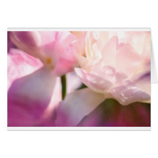 Two Peony Flowering Tulips with Petals Touching Card
