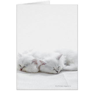 Two Persian Kittens Card