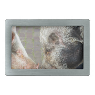 Two pigs making contact belt buckles