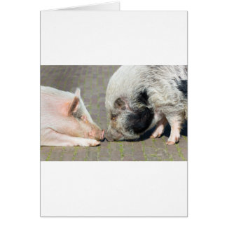 Two pigs making contact card