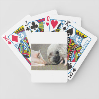 Two pigs making contact poker deck