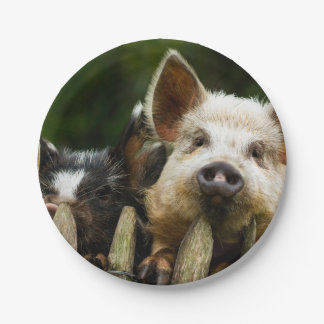 Two pigs - pig farm - pork farms 7 inch paper plate