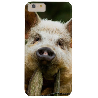 Two pigs - pig farm - pork farms barely there iPhone 6 plus case