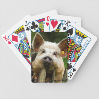 Two pigs - pig farm - pork farms bicycle playing cards