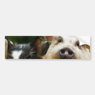 Two pigs - pig farm - pork farms bumper sticker