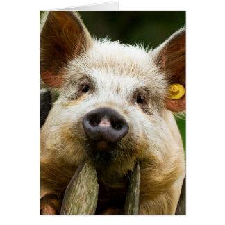 Two pigs - pig farm - pork farms card