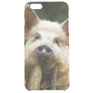 Two pigs - pig farm - pork farms clear iPhone 6 plus case