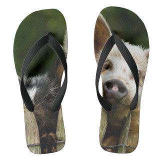Two pigs - pig farm - pork farms flip flops