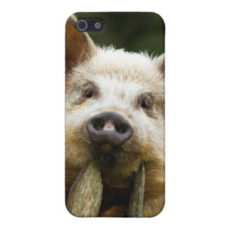 Two pigs - pig farm - pork farms iPhone 5/5S cover