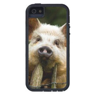 Two pigs - pig farm - pork farms iPhone 5 case