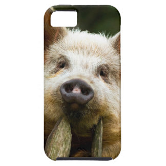 Two pigs - pig farm - pork farms iPhone 5 cover