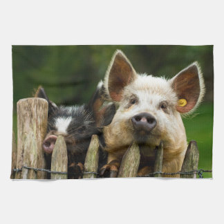 Two pigs - pig farm - pork farms kitchen towel