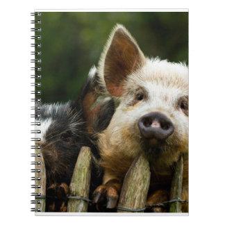 Two pigs - pig farm - pork farms notebook