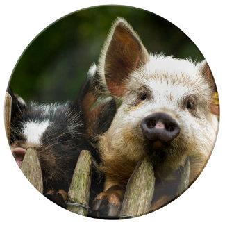 Two pigs - pig farm - pork farms porcelain plate
