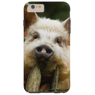 Two pigs - pig farm - pork farms tough iPhone 6 plus case