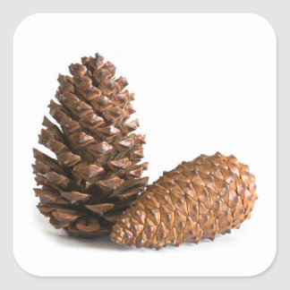 Two pinecones square sticker