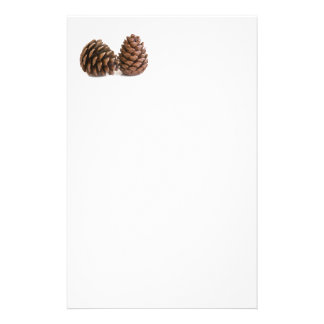 Two pinecones stationery