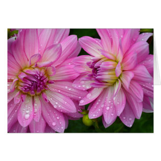 Two pink dahlia flowers card