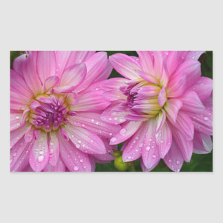 Two pink dahlia flowers sticker