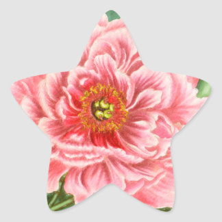 Two Pink Peonies Star Sticker