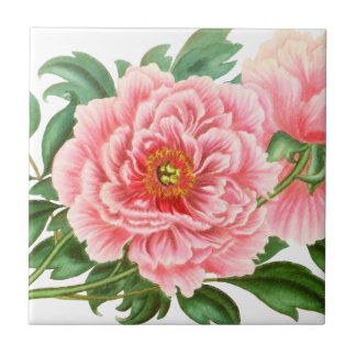 Two Pink Peonies Tile