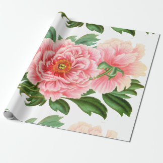 Two Pink Peonies Wrapping Paper