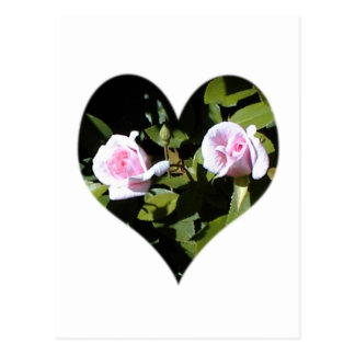 Two pink roses within a heart postcard