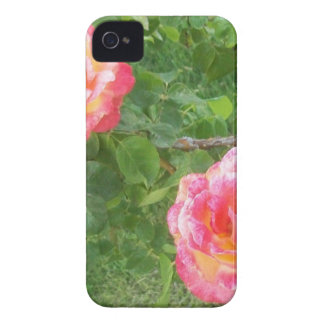 Two Pink & Yellow Spotted Roses on Green iPhone 4 Cover