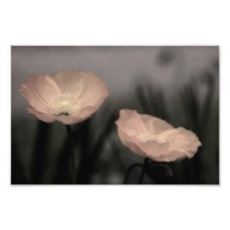 Two Poppies Photo Print
