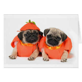 Two Pugs Card