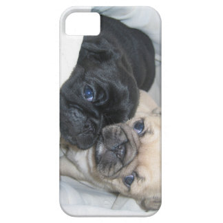 Two pugs case