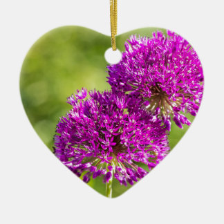 Two purple flowers of ornamental onions together ceramic heart ornament